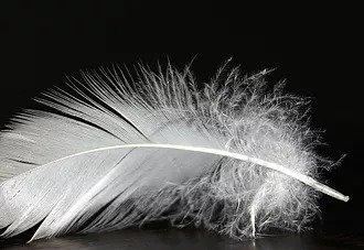 plume représentant la préparation à la semaine de jeûne et randonnée